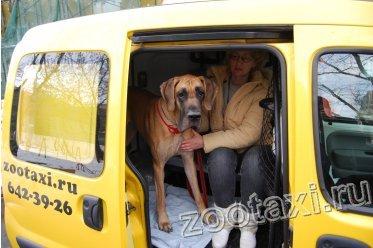 автомобили зоотакси, перевозка животных
